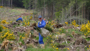 Tree Planting Service from Cawdor Forestry