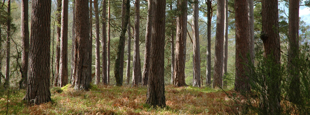 Woodland Certification at Cawdor Forestry