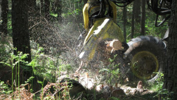 Forest Management at Cawdor Forestry