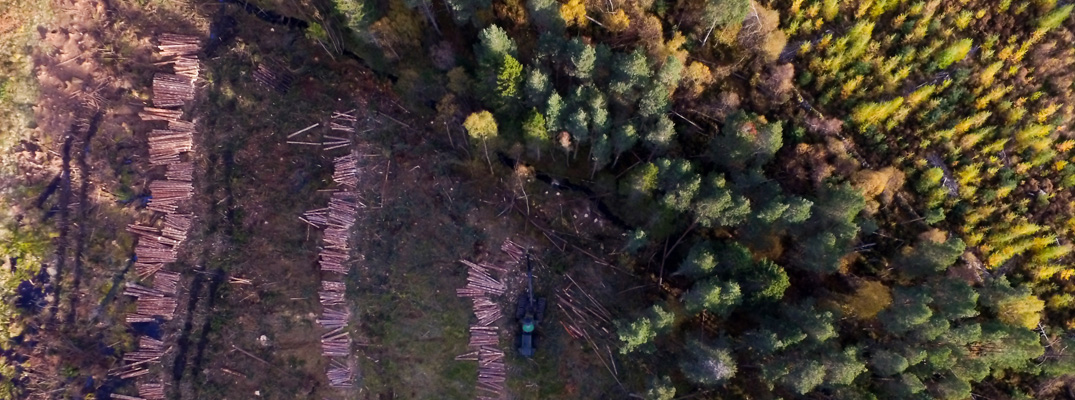 Forest Management - Welcome to Cawdor Forestry Welcome to