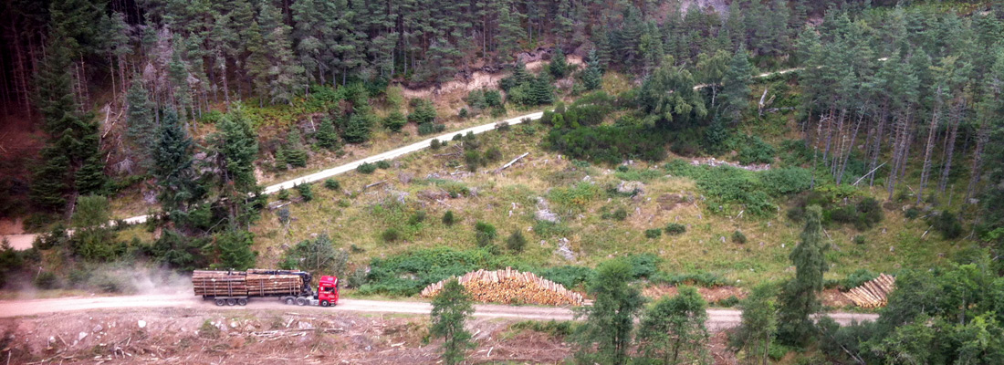 Cawdor Forestry - Woodland Management